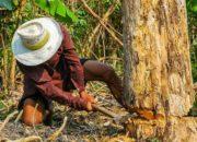 Jährlich vier Bäume pro Kopf! Wie kommt es, dass unser Lebensstil so viel Wald vernichtet?